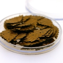 Lovertjes in rond doosje, blaadje, vier rijggaatjes, brons, 25 mm (4 gram)